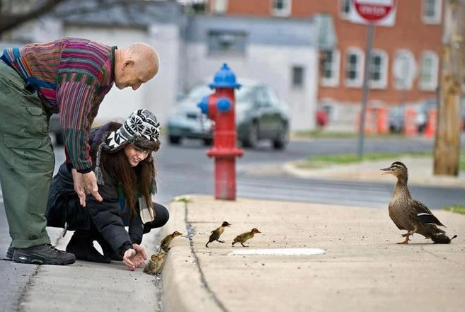 people-helping-ducklings